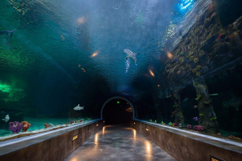 aquarium-interiors-1359