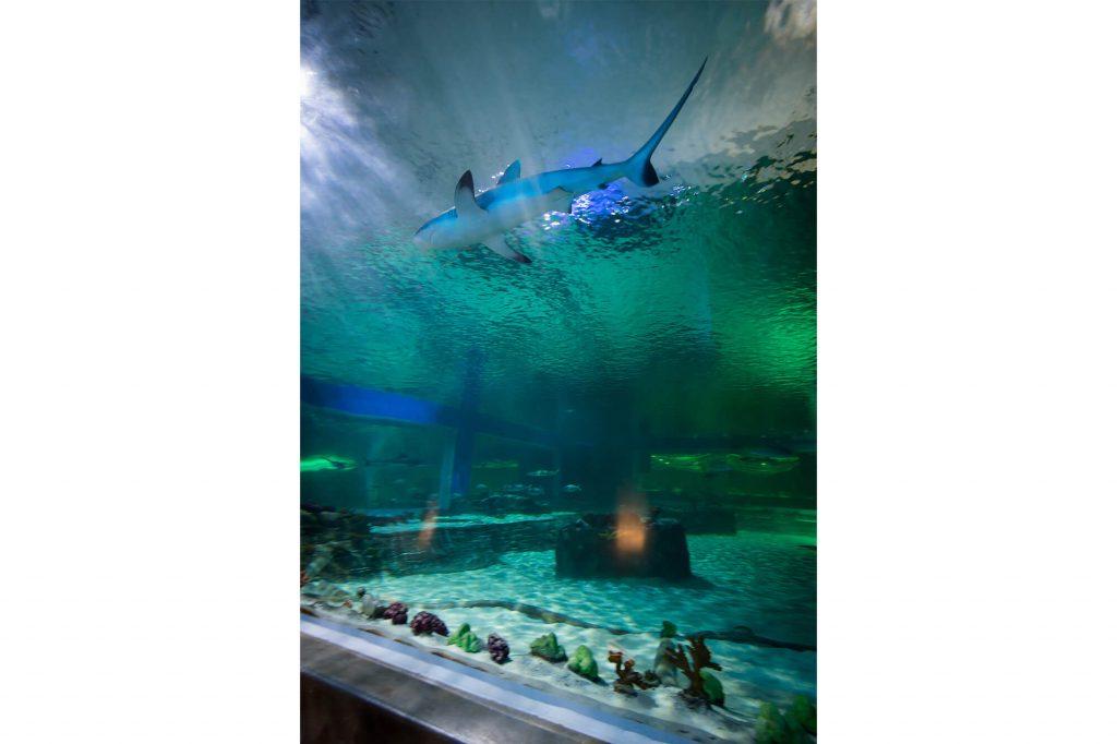 aquarium-interiors-1373